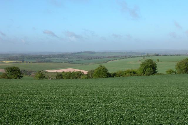 Looking towards Fawley Down from Cheesefoot Head