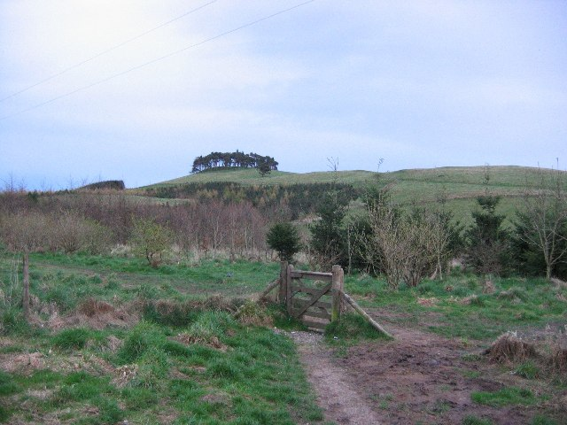 Law Hill Community Woodland