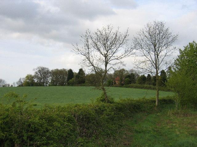 Bargain Wood
