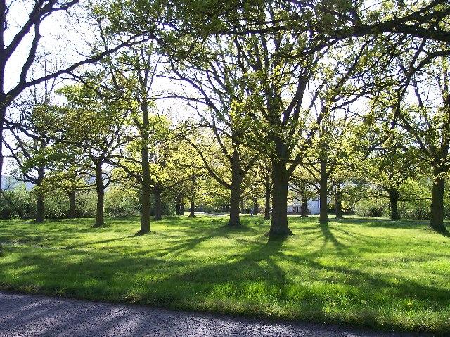 Sherrard's Green