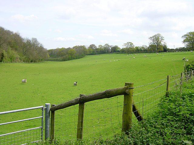 Sheep near Bedmonton