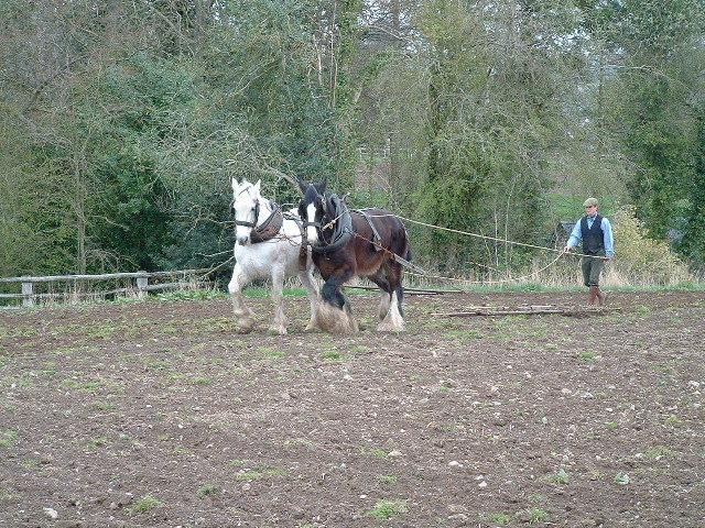 Horses Ploughing at Acton Scott Working Farm Museum