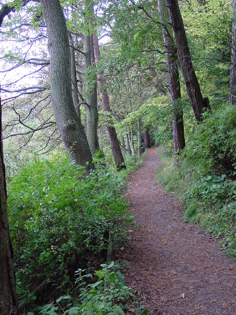 The riverside/woodland path from Rothbury to Thrum Mill.
