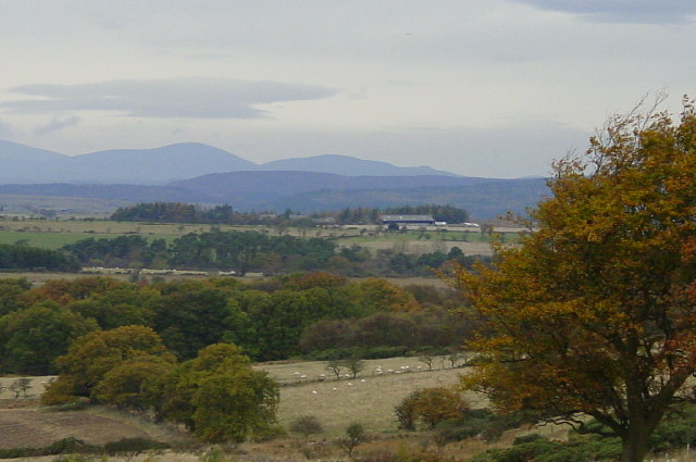 Looking towards the Cheviots from Stanton.