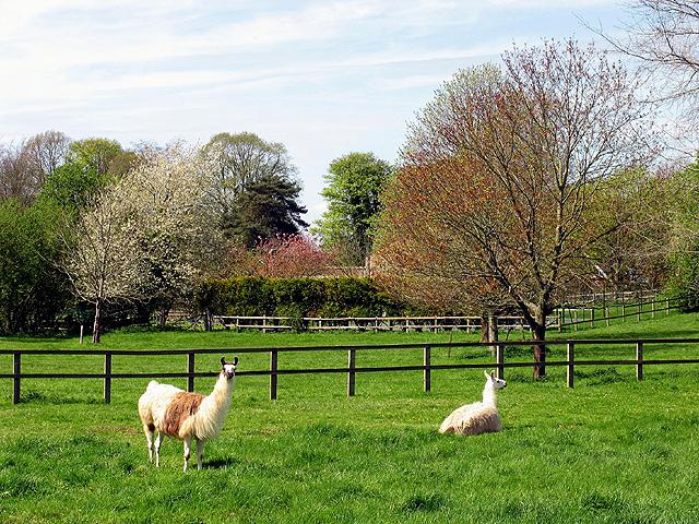 Farm on the Wallingtons Road