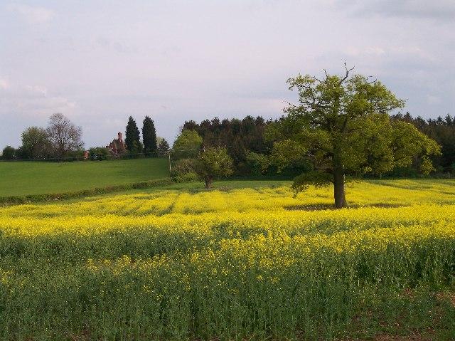 Upper Woodsfield Farm and Woodsfield Coppice