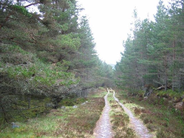 Forest Road, Inveruglas