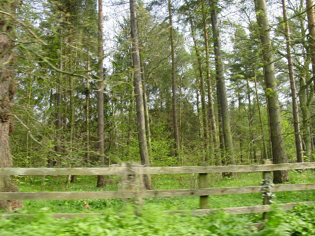Woodland on the B6306 past Wheel Birks Bridge