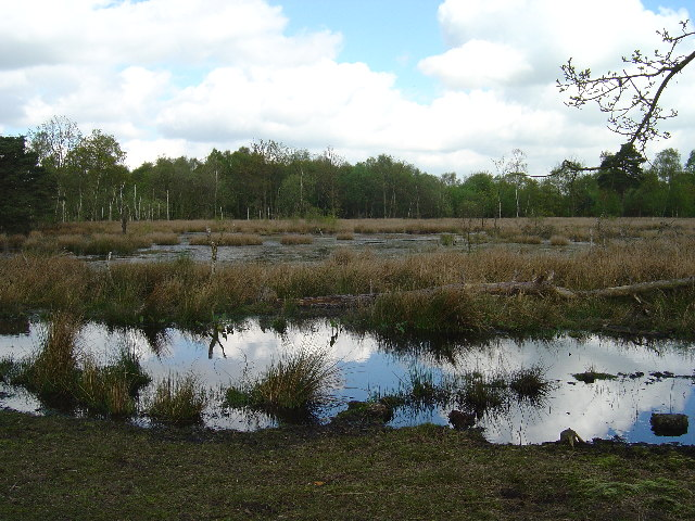 Skipwith Common