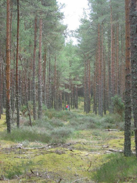 Lossie Forest