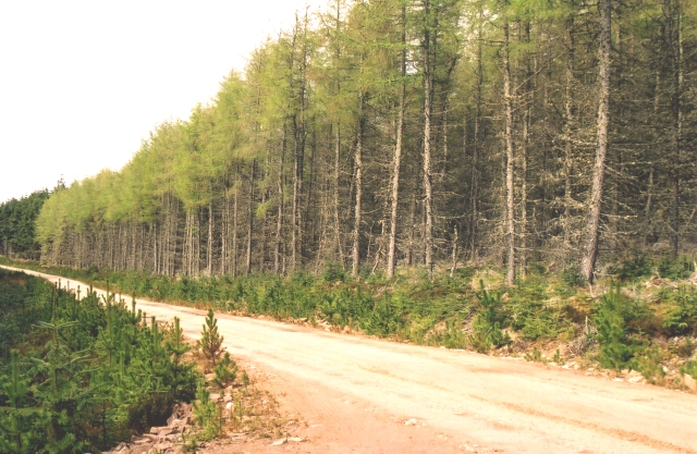 Aultmore Forest