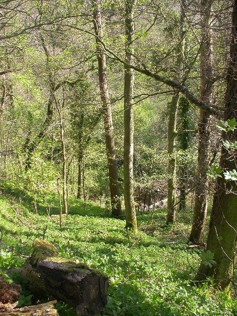 Deepdale Wood
