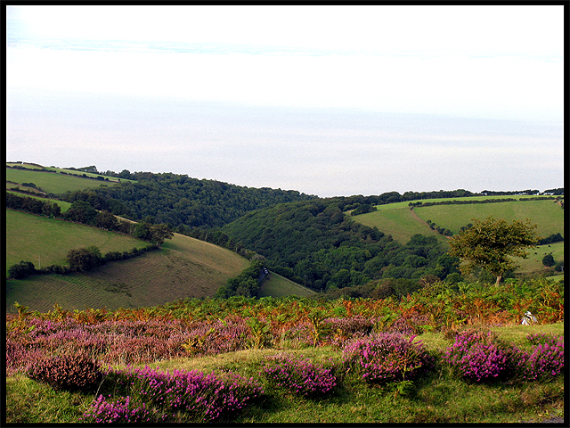 Worthy Wood: Exmoor