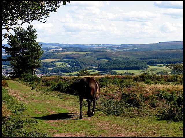 Exmoor and Pony