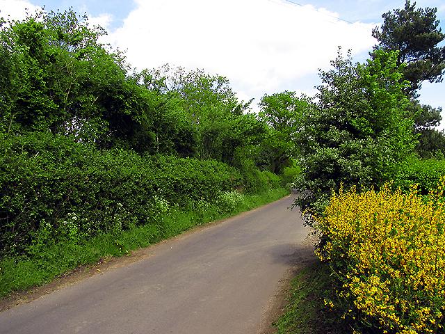 Webbs Lane: Beenham