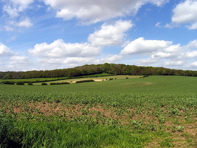 Farmland near Stanford Dingley