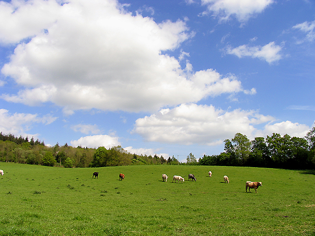 Coxland Cottage Field near Stanford Dingley