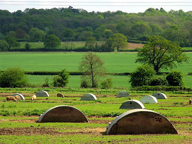 Pig Farming Near Bucklebury
