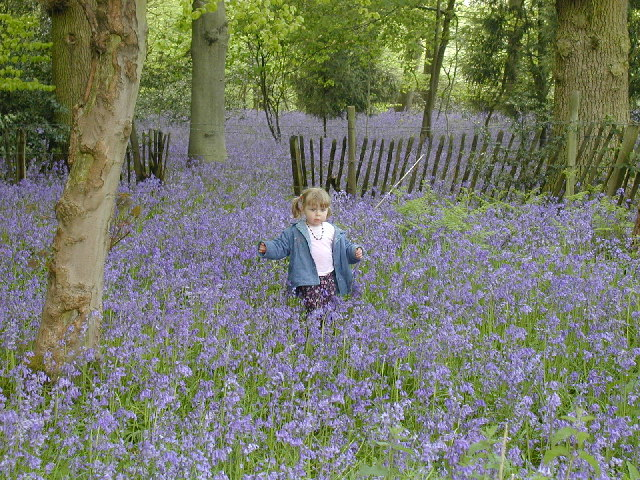 Bluebell Wood at Chiltern Open Air Museum