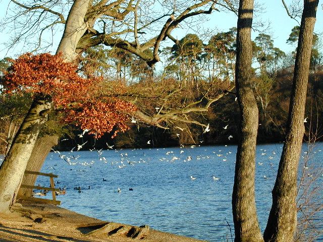 The lake at Black Park Country Park