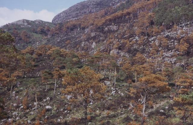 Glen Shieldaig