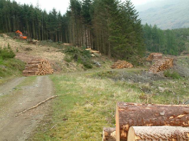 Forestry works on Harter Fell