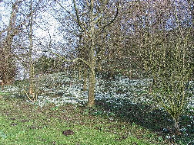 Snowdrops at The Binns