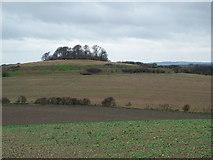 SU5791 : Sinodun Hills by The Dewdrops