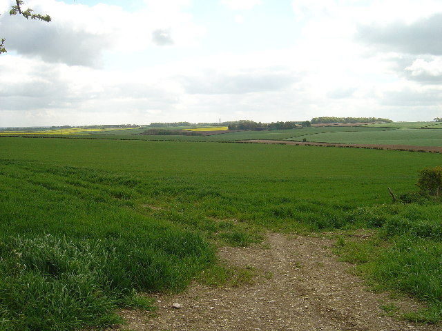 Winter wheat on Lund Wold