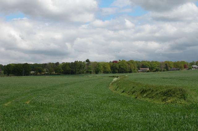 Farmland showing ancient field boundaries.