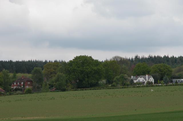 Halecommon