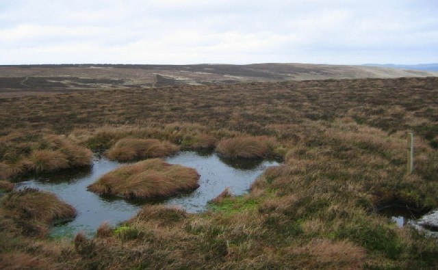 Bog on Mount Main