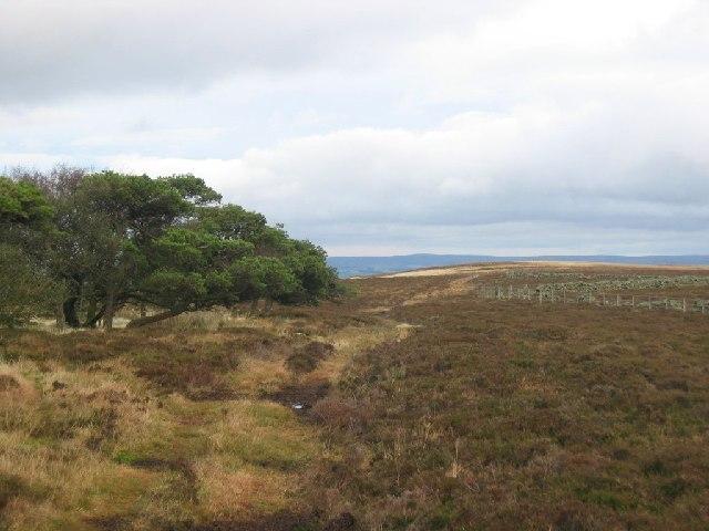 George Wood Plantation