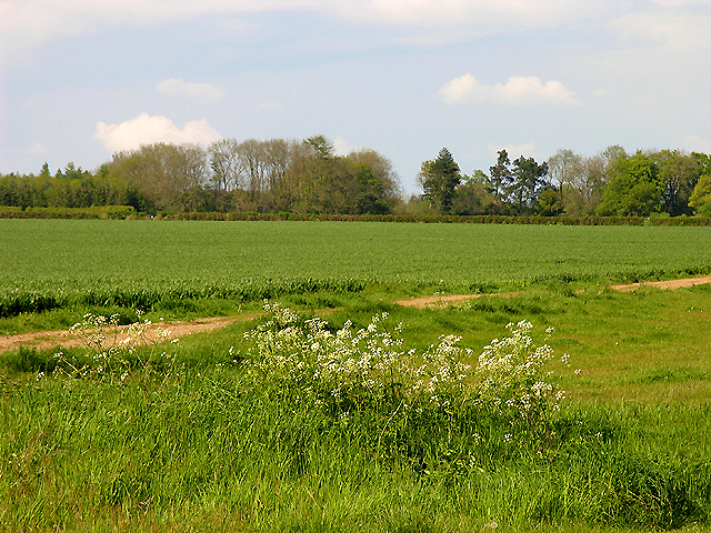 View of Boundary hedge near Broadfield Cottage