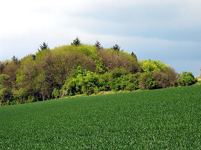 Copse (not named) near Hartridge Farm