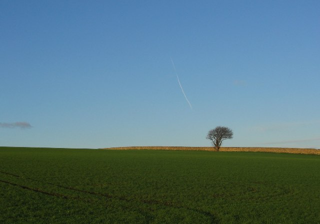Winter sown crops, Tyrie.
