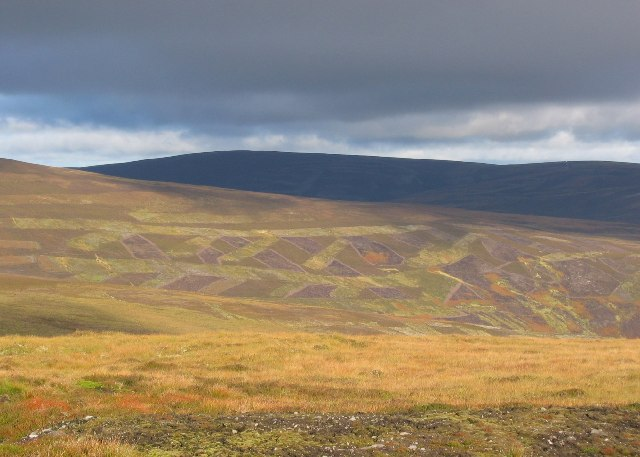 Heather patterns from Carn an Fhadhairc.