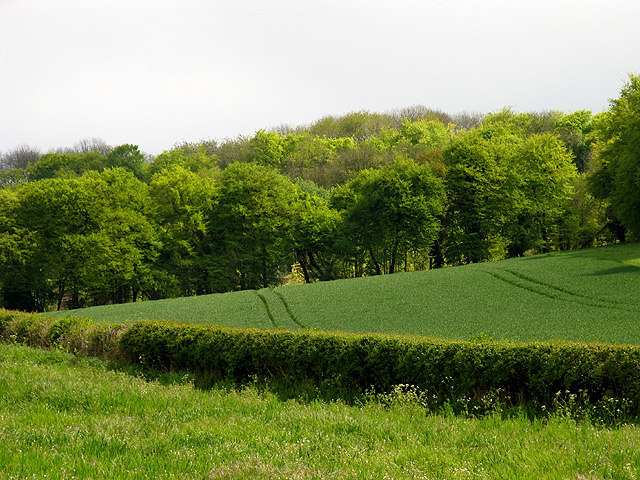 Farmland and Hartridge Lye Wood