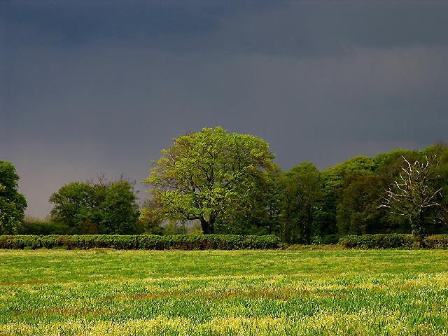Stormy Light