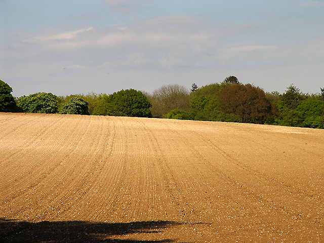 Ploughed Field off Manston's Lane