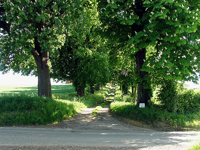 Chestnut trees at Manstons Farm Entrance