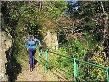 NS9197 : The Mill Glen walkway by Richard Webb