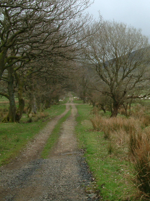 Track across farmland
