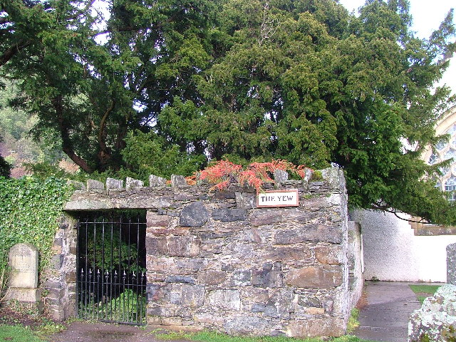 Fortingall Yew Tree