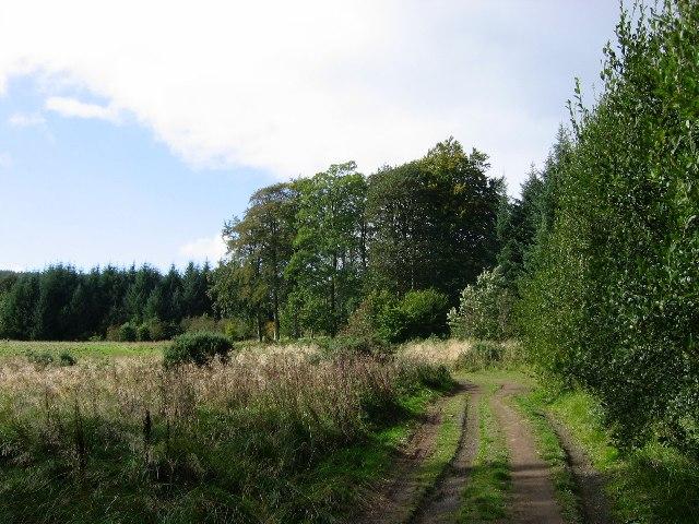 Duns Wood