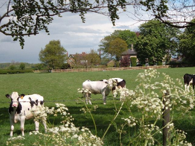 Rawcliffe Farm