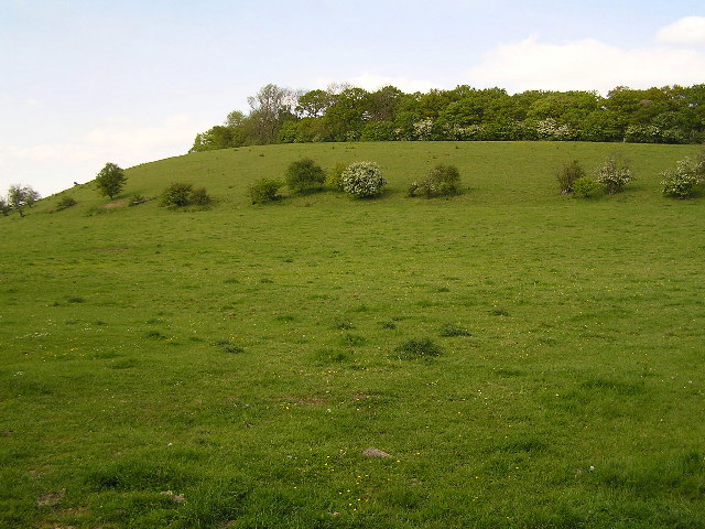 Thrift Wood photographed from Bredicot lane.