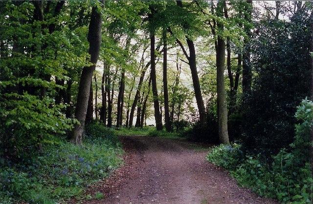 Bur Wood