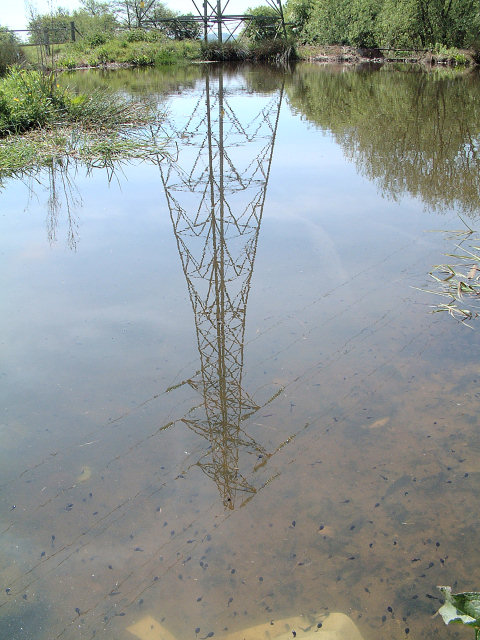 Tadpoles and Pylons
