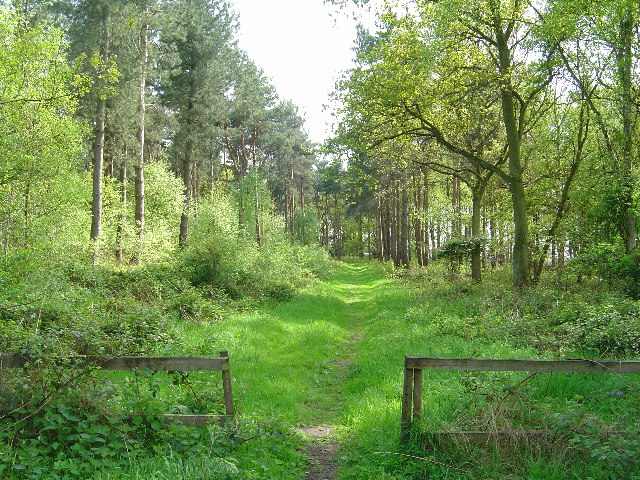 Western entrance to Allerthorpe Common